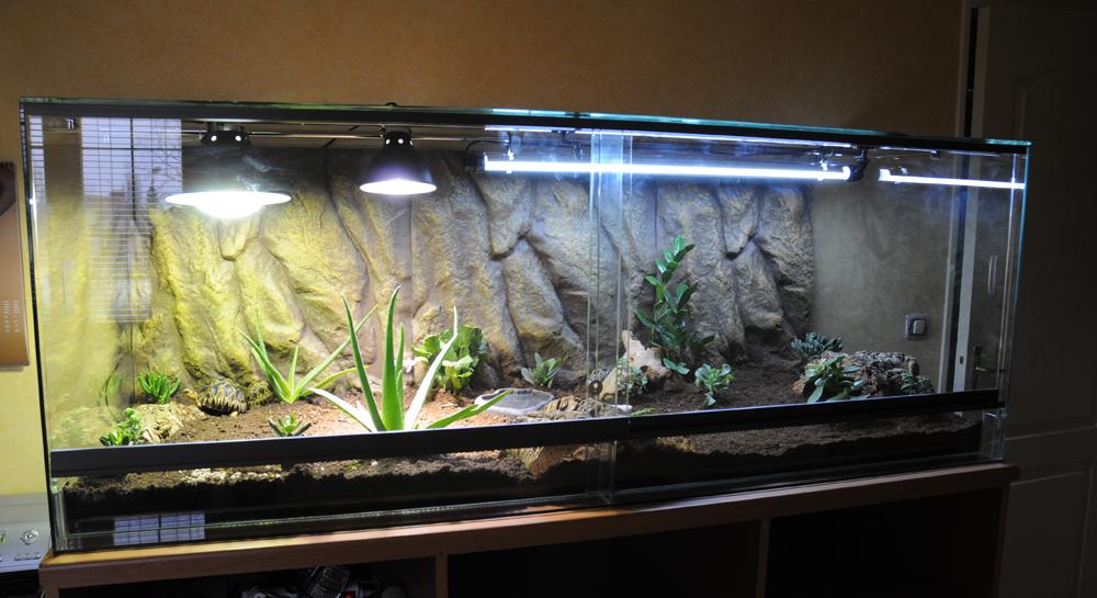 Exemple Terrarium Astrochelys Radiata 001