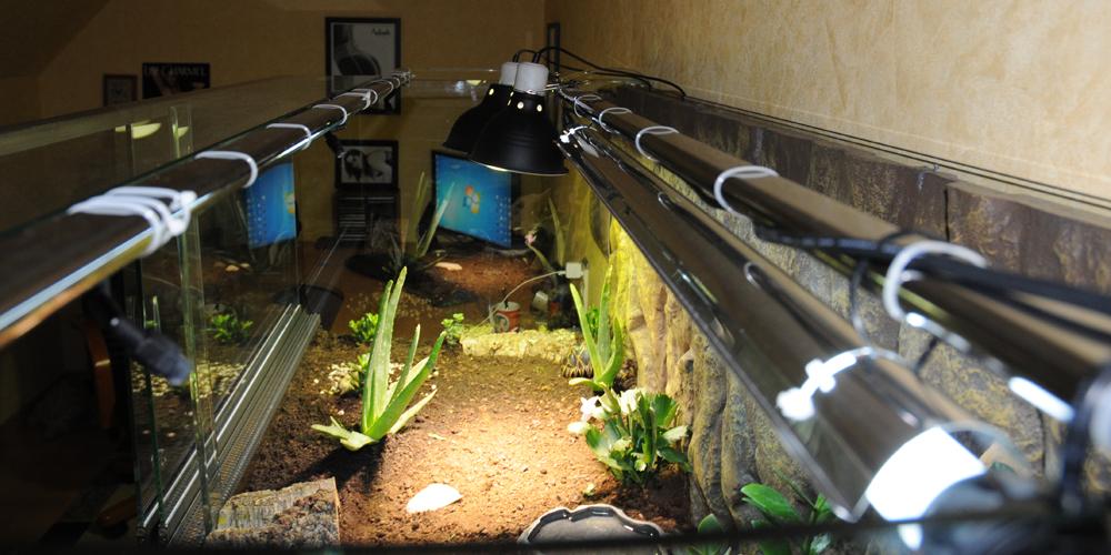 Exemple Terrarium Astrochelys Radiata 008