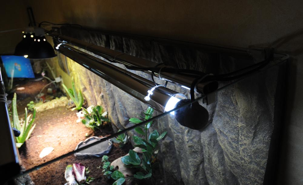 Exemple Terrarium Astrochelys Radiata 009