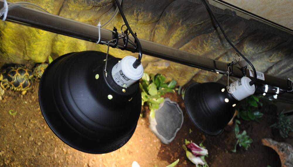 Exemple Terrarium Astrochelys Radiata 011