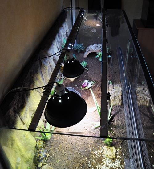 Exemple Terrarium Astrochelys Radiata 012