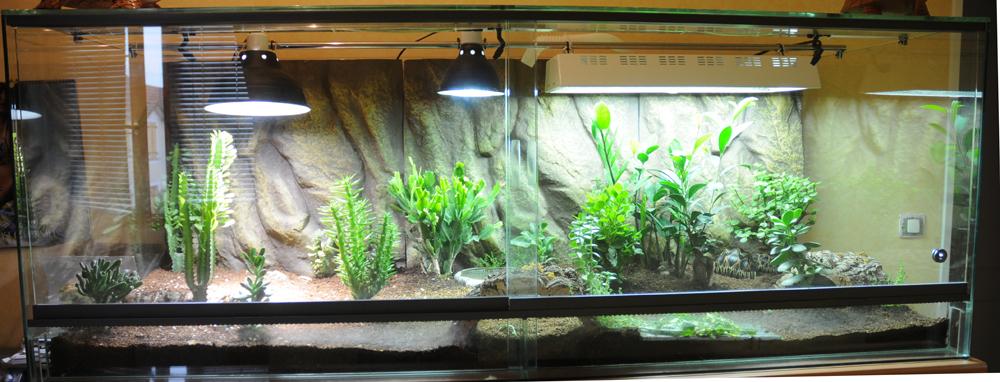 Exemple Terrarium Astrochelys Radiata Terra_01