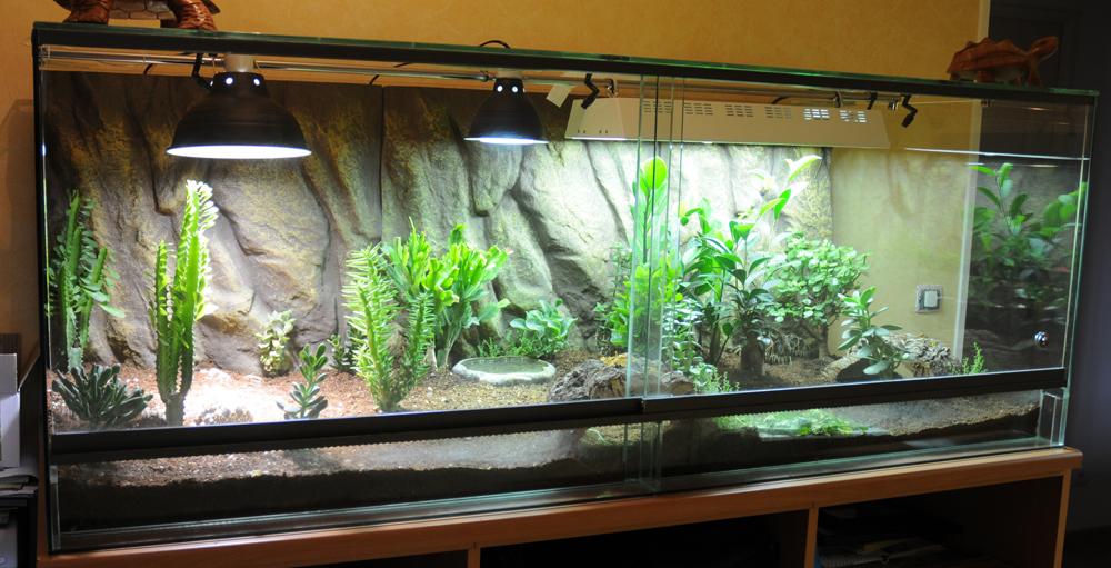 Exemple Terrarium Astrochelys Radiata Terra_02