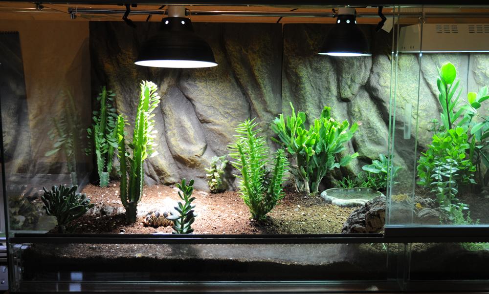 Exemple Terrarium Astrochelys Radiata Terra_03