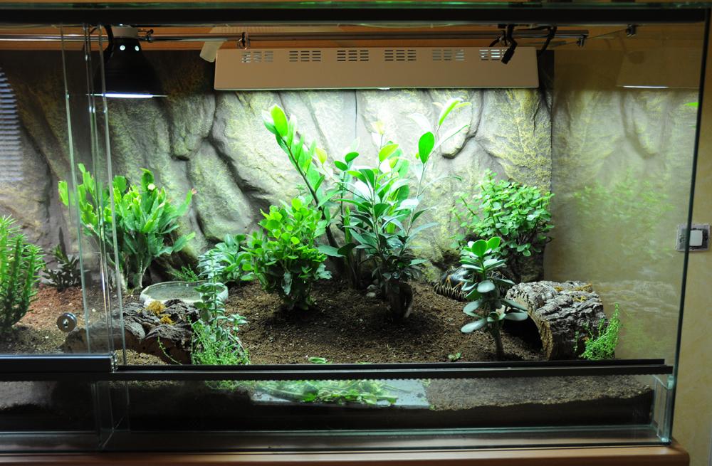 exemple terrarium astrochelys radiata page 2. Black Bedroom Furniture Sets. Home Design Ideas