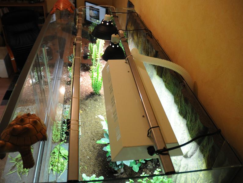 Exemple Terrarium Astrochelys Radiata Terra_06