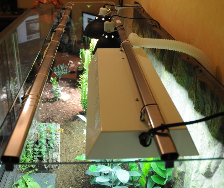 Exemple Terrarium Astrochelys Radiata Terra_07