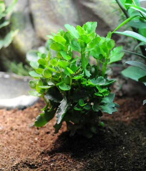 Exemple Terrarium Astrochelys Radiata Terra_09