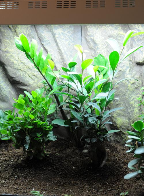 Exemple Terrarium Astrochelys Radiata Terra_11